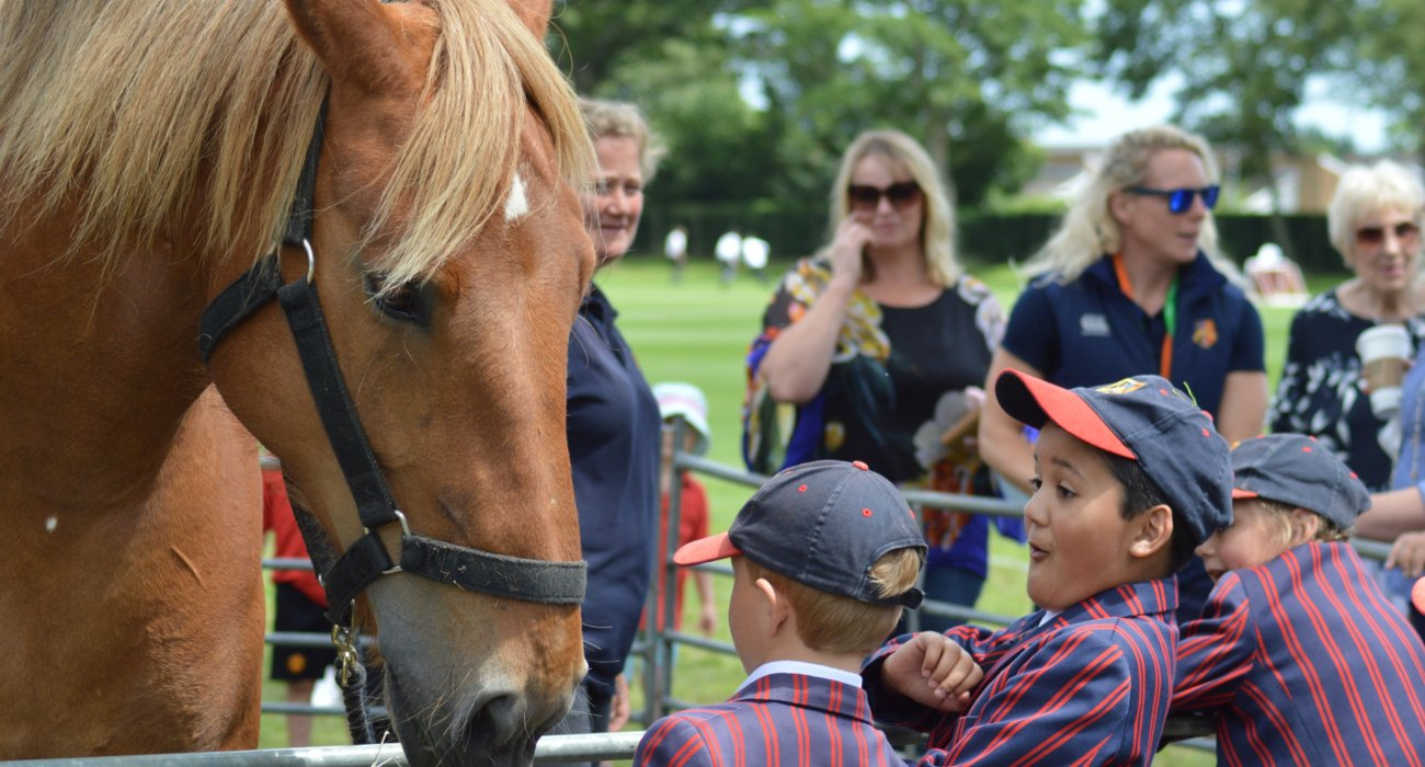 Prep Children are Amazed by Suffolk Punch